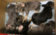 Die Polizei hat fünf Hundewelpen auf der A9 in einem Kofferraum entdeckt. Die Tiere sollten verkauft werden. Foto: Polizei Hof