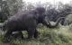 Das Mammut am Bayreuther Röhrensee wurde demoliert. Foto: privat