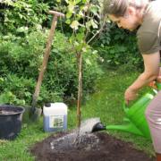 Zur Versorgung mit wichtigen Nährstoffen lohnt die Anwendung einer vitalisierenden Pflanzenkur, die auch das mikrobielle Bodenleben unterstützt. Foto: djd/www.waldleben.eu