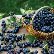 Die Apfelbeere wird wegen ihres hohen Gehaltes an Flavonoiden, Vitaminen und Mineralstoffen in der modernen Küche als Superfood bezeichnet. Foto: djd/www.as-garten.de