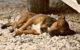 Bei Fressnapf sind Hundesnacks verkauft worden, die Salmonellen enthalten können. Symbolfoto: Pixabay