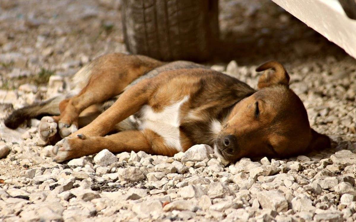 In Bayreuth hat eine Hundebesitzerin am Samstag (1.8.2020) zwei Hunde im aufgeheizten Auto zurückgelassen. Einer der beiden Hunde starb. Symbolfoto: Pixabay