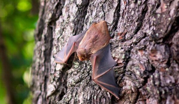 Momentan kann es vorkommen, dass sich Fledermäuse in Häuser und Wohnungen verirren. Foto: pixabay
