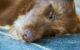 In Bayreuth wurde ein Köder gefunden, der mit Nägeln und Schrauben bestückt war. Die Polizei warnt alle Hundehalter. Foto: pixabay