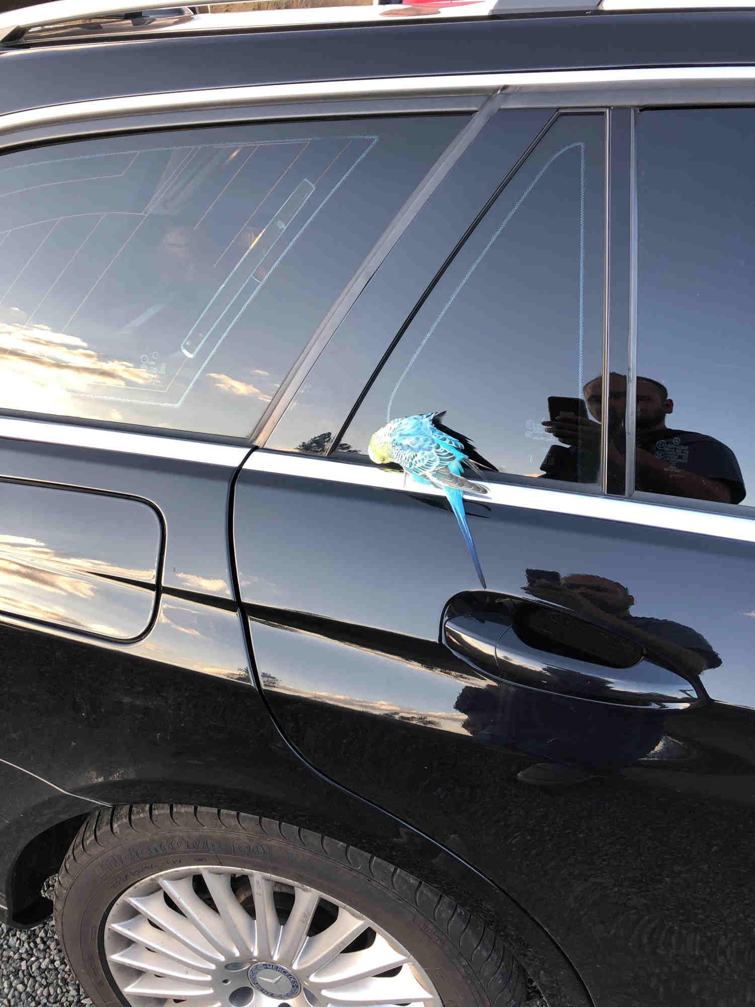 In Gattendorf im Kreis Hof haben Polizisten einen Wellensittich gefunden. Foto: Grenzpolizei Selb