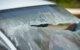 Die Windschutzscheibe eines Auto ist nach einem Unfall kaputt. Foto: pixabay