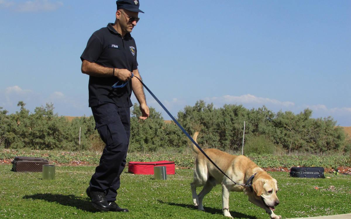 Die Polizei Mittelfranken gibt einen Einblick in das Leben eines Diensthundes bei der bayerischen Polizei. Symbolfoto: pixabay