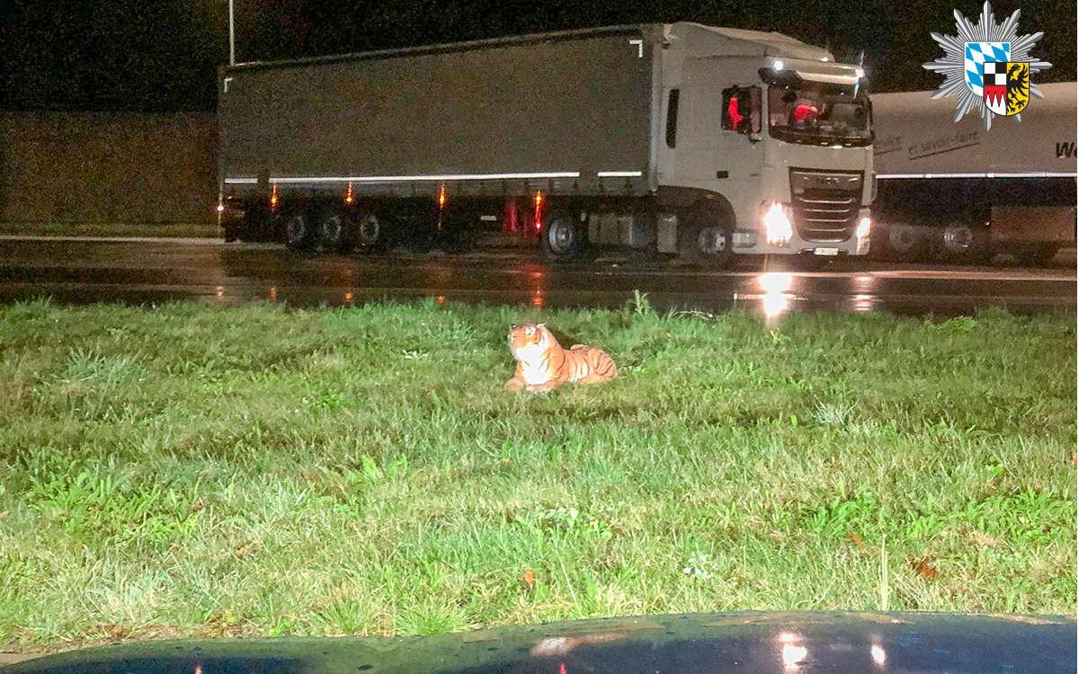 Der Verkehrspolizei Feucht wurde ein Tiger auf einem Rastplatz gemeldet. Foto: Polizei