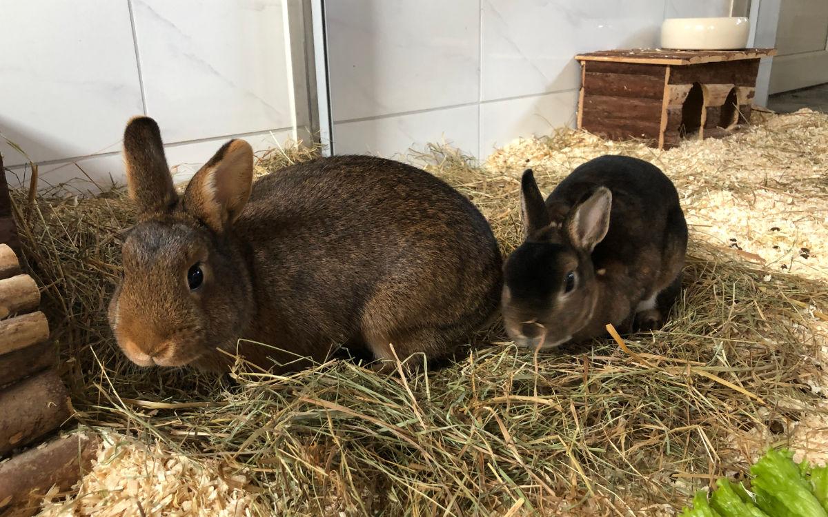 Cassie (rechts) und Däumelinchen (links) wollen endlich in ein neues Zuhause einziehen. Foto: Susanne Monz