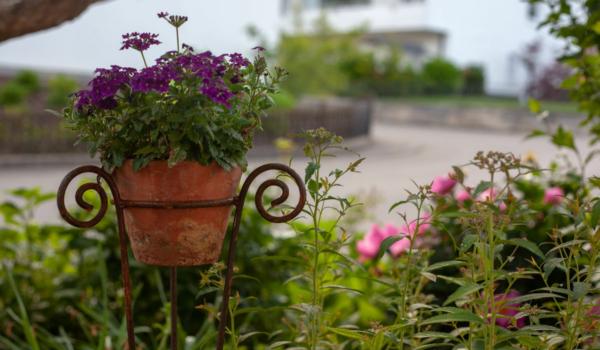 Gartenarbeiten in Bayreuth: Darauf muss geachtet werden. Symbolfoto: pixabay