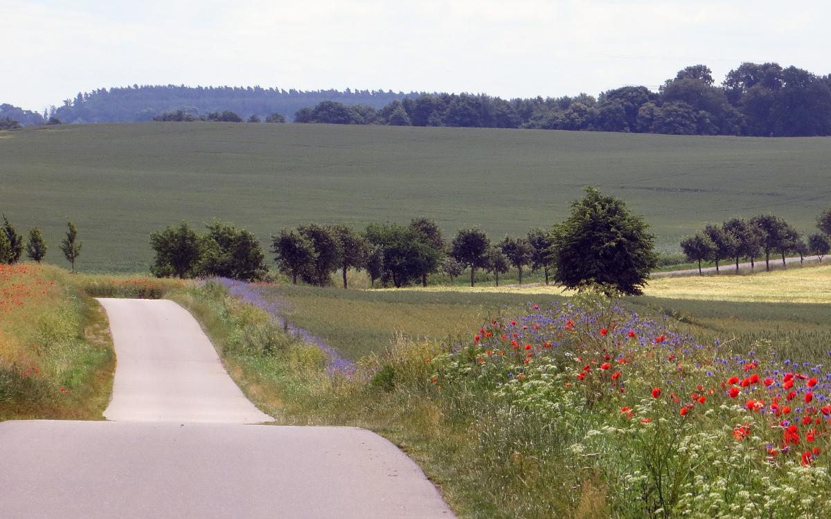 Am Montag (2.11.2020) hat sicher der Kreisausschuss mit dem Geh- und Radwegenetz im Landkreis Bayreuth beschäftigt. Symbolfoto: pixabay