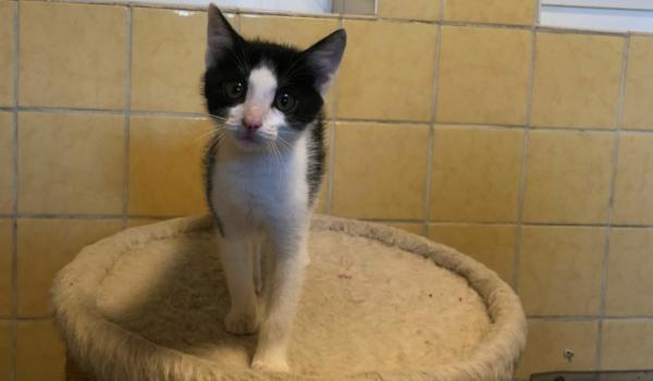 Lola ist die jüngste in der Katzen-WG im Tierheim Bayreuth. Foto: Katharina Adler