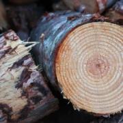 Gestapeltes Holz. Foto: Pixabay