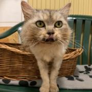 Katze Lou ist auf dem Weg der Besserung. Foto: Tierheim Bayreuth