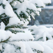 Der DWD warnt für den 1. Dezember vor Schneefall in Stadt und Landkreis Bayreuth. Symbolfoto: Pixabay