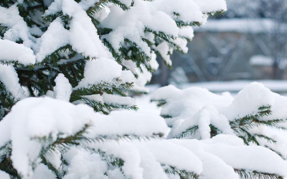 Schneemassen haben im Kreis Kulmbach für mehrere Einsätze der Rettungskräfte gesorgt. Symbolfoto: Pixabay