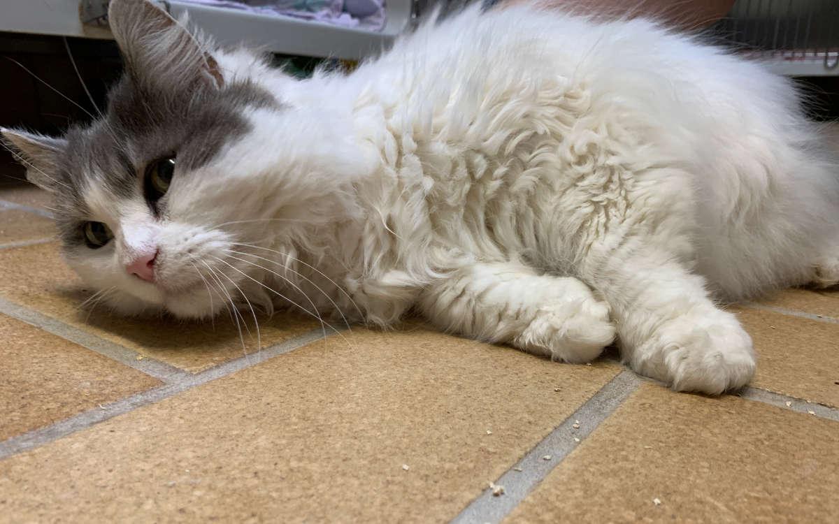 Katze Uschi wird gerne gestreichelt. Foto: Katharina Adler