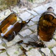 Eine zerbrochene Glasflasche. Foto: Pixabay