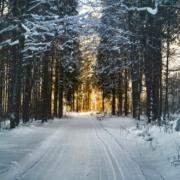 In Bayreuth Stadt und Landkreis wird erneut vor Schneefall gewarnt. Symbolfoto: Pexels