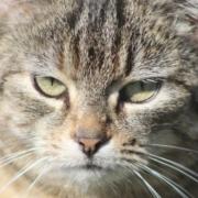 Wegen eines Streits um Katzen hat die Polizei in Hof einen Verstoß gegen die Kontaktbeschränkungen aufgedeckt. Symbolfoto: Pixabay