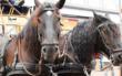 Bei einem tragischen Kutschunglück in Mittelfranken sind zwei Pferde in einem Fluss ertrunken. Symbolfoto: Pixabay