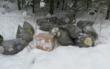 Müllsünder bei Kupferberg: Die Polizei sucht Zeugen. Foto: Polizei