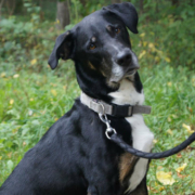 Toni möchte sein restliches Leben nicht im Tierheim Bayreuth verbringen. Foto: Tierheim Bayreuth