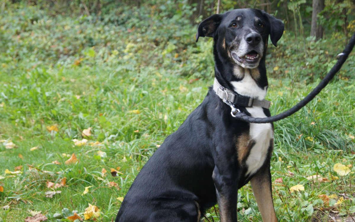 Toni ist ein lieber Hund. Foto: Tierheim Bayreuth