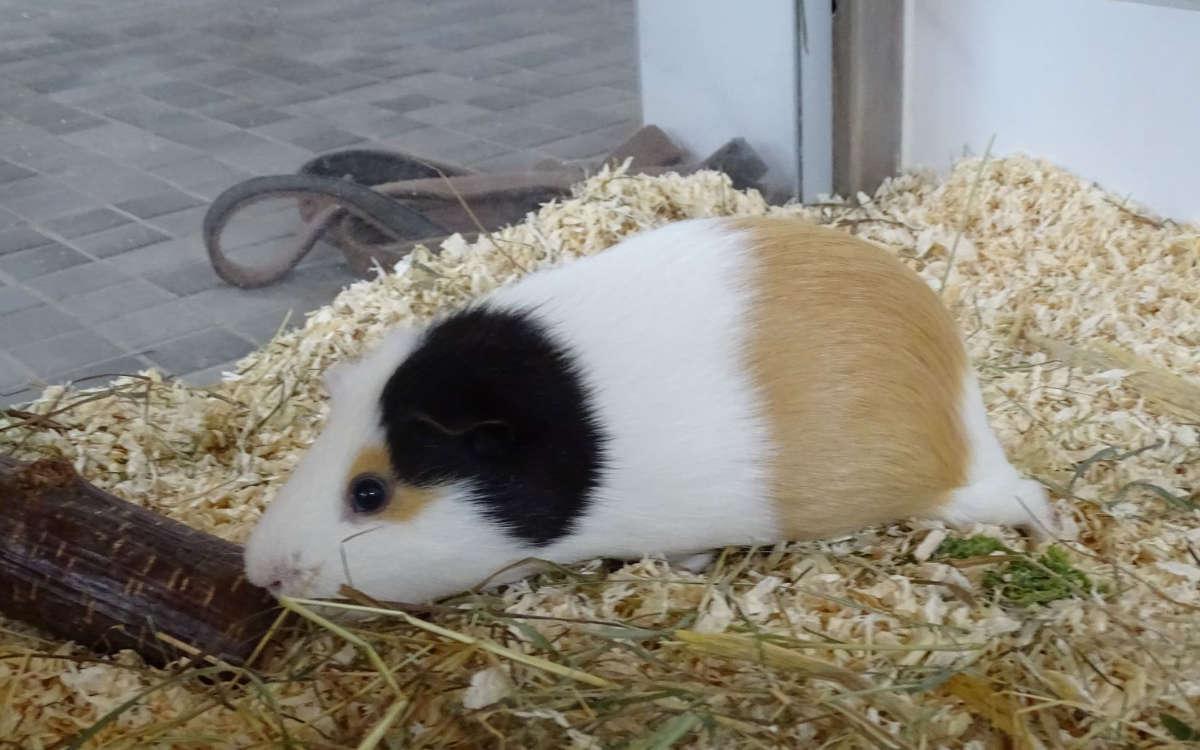 Rike möchte gerne zusammen mit ihrem Freund Jordy in ein neues Zuhause umziehen. Foto: Tierheim Bayreuth