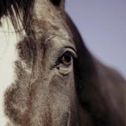 In Bindlach (Landkreis Bayreuth) wurde im Januar ein Pferd schwer verletzt. Laut Ermittlungen der Polizei handelte es sich dabei nicht wie zunächst angenommen um Tierquälerei. Symbolfoto: Pixabay