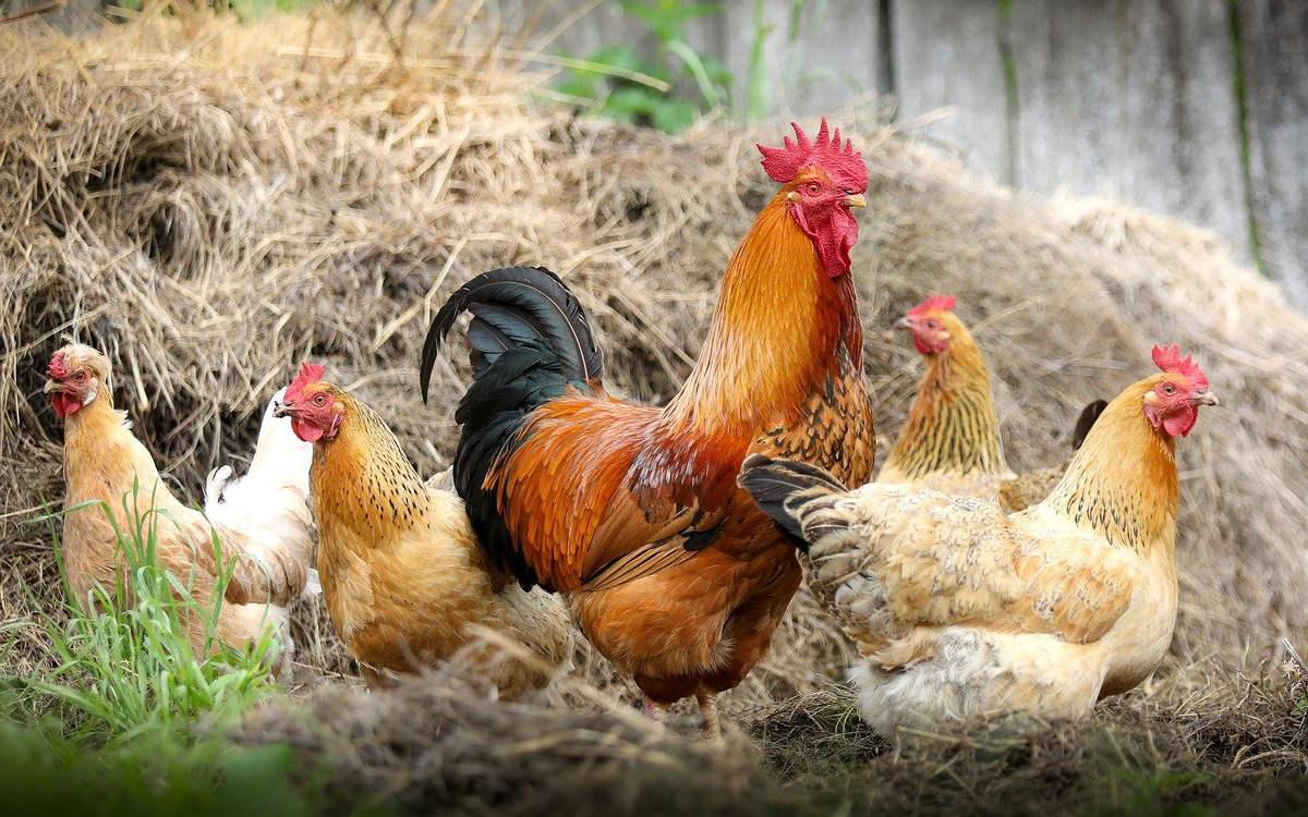 Im Landkreis Coburg in Oberfranken wurden verschiedene Vogeltiere und Forellen gestohlen. Symbolfoto: pixabay