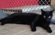 Irelie wartet im Tierheim Bayreuth auf ein neues Zuhause. Foto: Tierheim Bayreuth