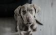 Im Landkreis Bayreuth wurde ein gefährlicher Hundeköder entdeckt. Symbolfoto: Pixabay