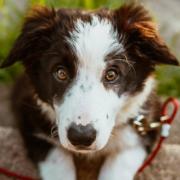In Oberfranken ist ein Hund auf die Autobahn gelaufen. Foto: Pexels/Josh Hild