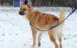 Hund Simba wartet im Tierheim Bayreuth auf ein neues Zuhause. Foto: Tierheim Bayreuth