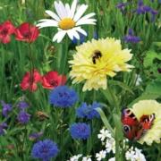 Bunte Blumenmischungen erfreuen das Auge und liefern nützlichen Insekten einen reich gedeckten Tisch. Foto: Sperli/akz-o
