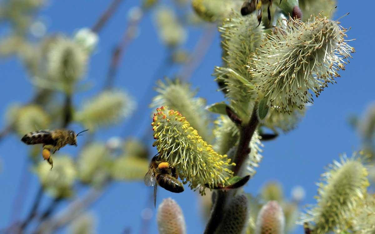 Der Frühling naht: Heuschnupfen-Allergiker können mit einigen Verhaltensregeln diese Zeit besser genießen. Foto: pixabay.com/akz-o