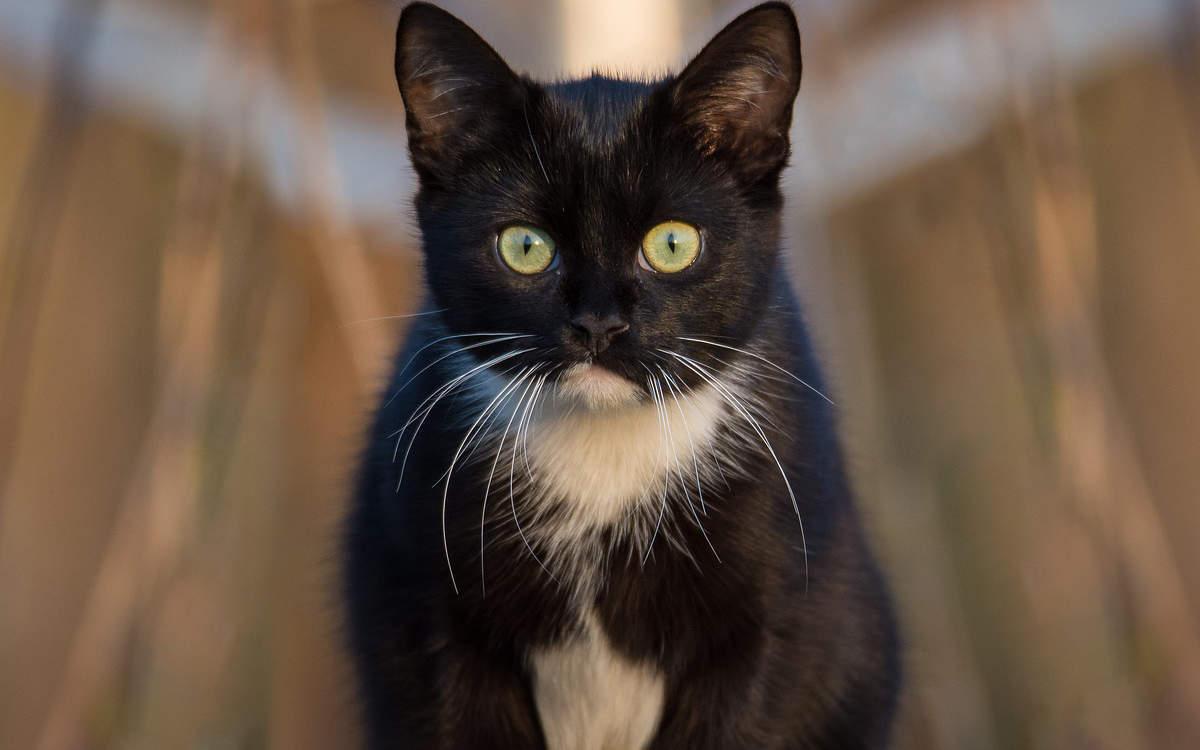 Eine schwer verletzte Katze wurde in Mainleus gefunden. Die Polizei ermittelt, ob die Katze misshandelt wurde. Symbolfoto: pixabay