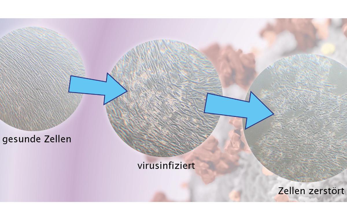 Eigentlich ist Daniel Seitz Diplom Biologe, hat also eigentlich gar nichts mit Viren am Hut. Er kann aber etwas, das im Kampf gegen Corona helfen könnte. Foto: BioMed Innovation gGmbH