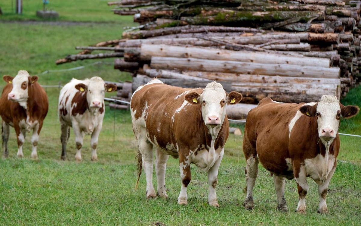 Empörung über Tiertransport von Bayreuth nach Marokko: Tierschützer kritisieren das Vorhaben. Symbolfoto: pixabay