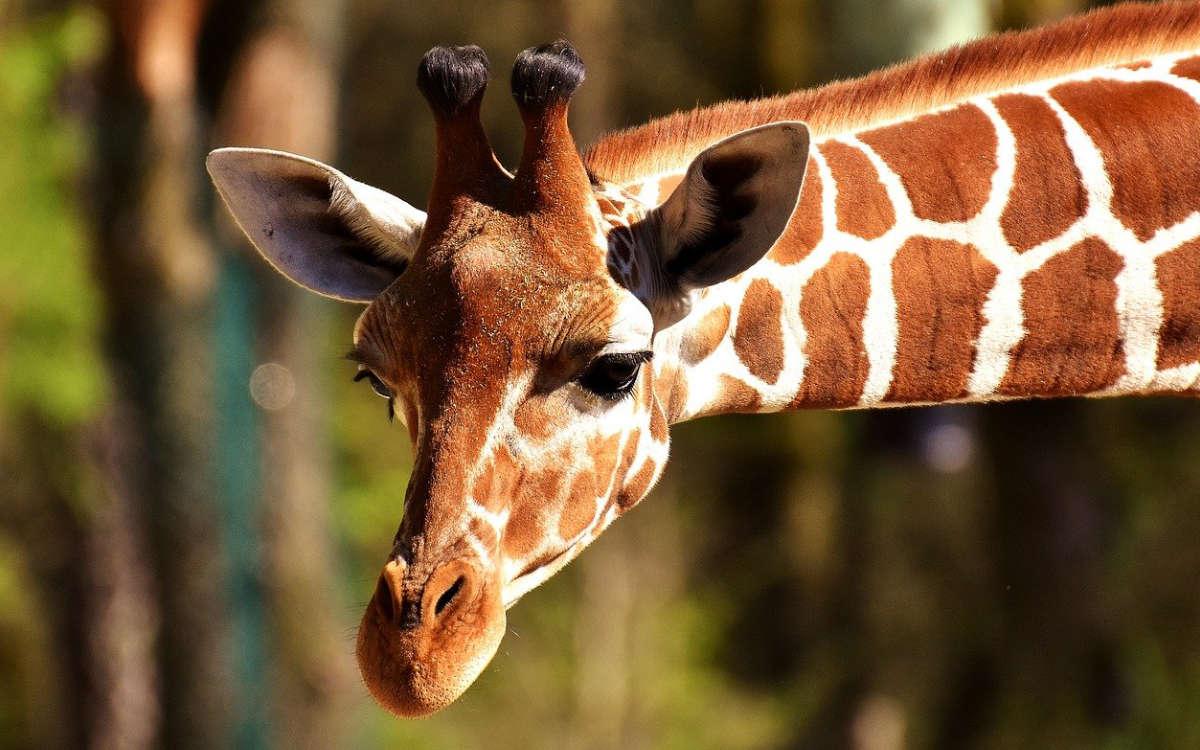 Der Zoo in Nürnberg darf ab Freitag wieder öffnen. Symbolfoto: pixabay
