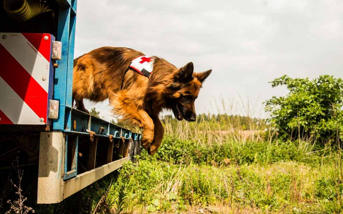 Die Hundestaffel des BRK in Bayreuth ist dringend auf Spenden angewiesen. Bild: privat