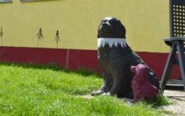 Das Tierheim in Bayreuth: Diese Hunde brauchen dringend ein liebe- und verständnisvolles neues Zuhause. Foto Raphael Weiß