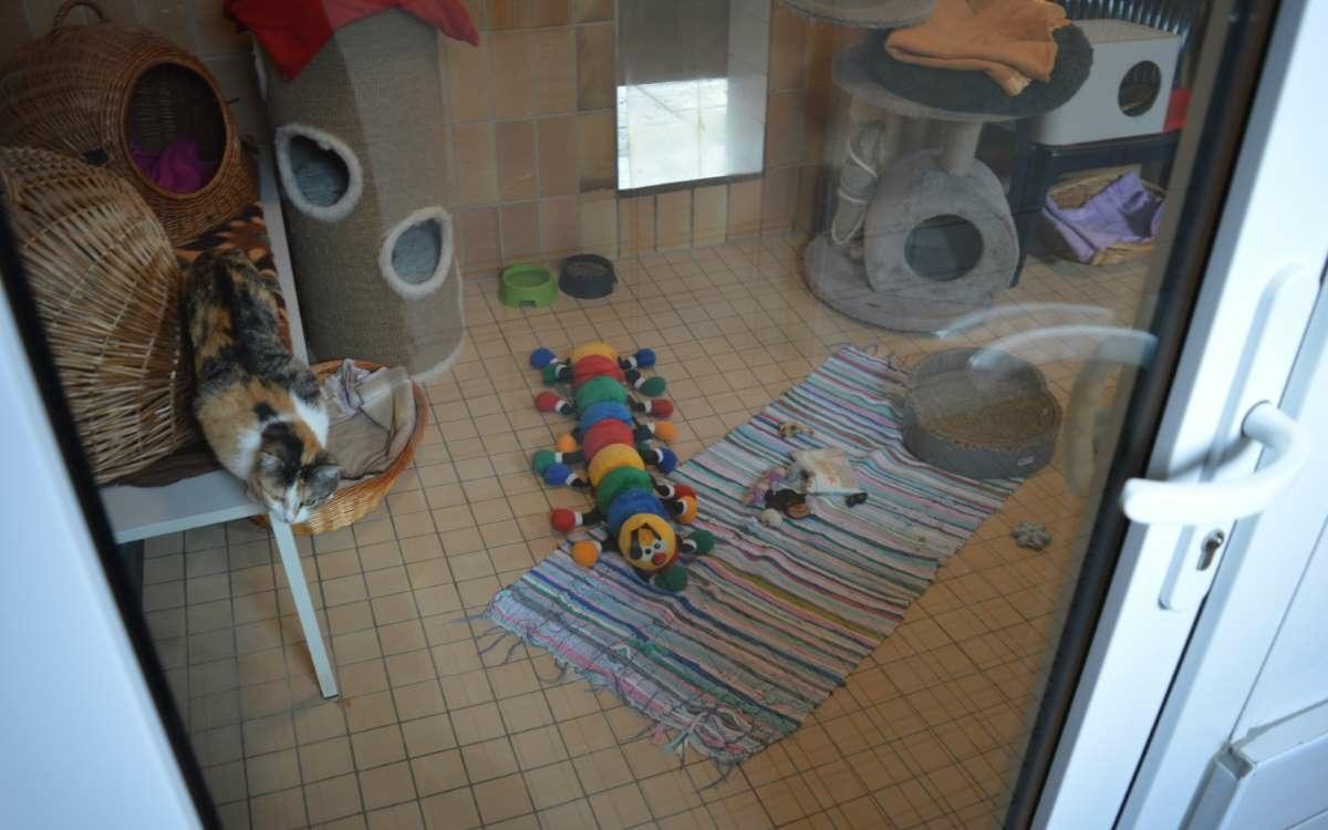 Das Tierheim in Bayreuth in der Corona-Pandemie: Das ist die aktuelle Lage. Foto Raphael Weiß