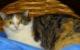 Die vier Katzen Bänley, Bexter, Blaye und Blanka im Tierheim in Bayreuth wollen wieder zu Menschen finden. Foto: Tierheim Bayreuth