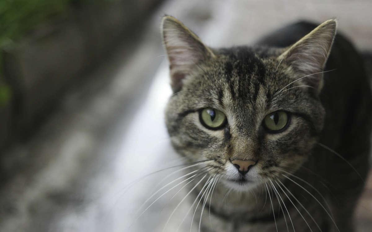 Katze stirbt in Bayreuth an Gift. Tierrettung warnt andere Besitzer. Symbolfoto: Pixabay