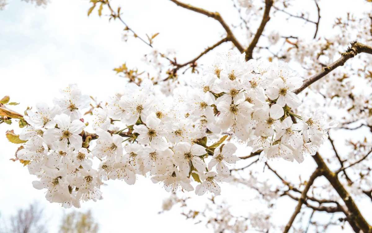 Vor allem im Mai verzaubert der Schlosspark mit einer Blütenpracht. Foto: Alexandra Baier