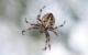 Eine Spinne hat eine junge Autofahrerin so sehr erschreckt, dass diese sich mit ihrem Ford Fiesta überschlagen hat. Symbolbild: Unsplash/Krzysztof Niewolny