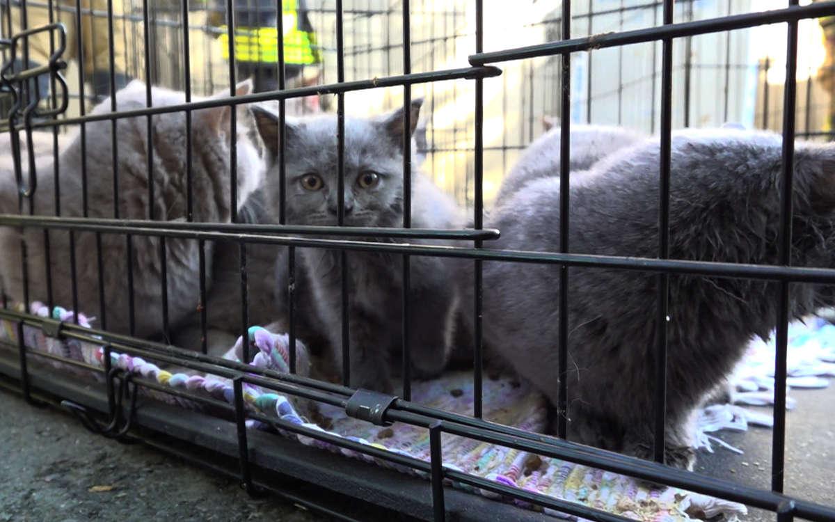 Mehrere Katzen sind bei einem Zimmerbrand in Hof im Feuer ums Leben gekommen. Foto: News5/Fricke
