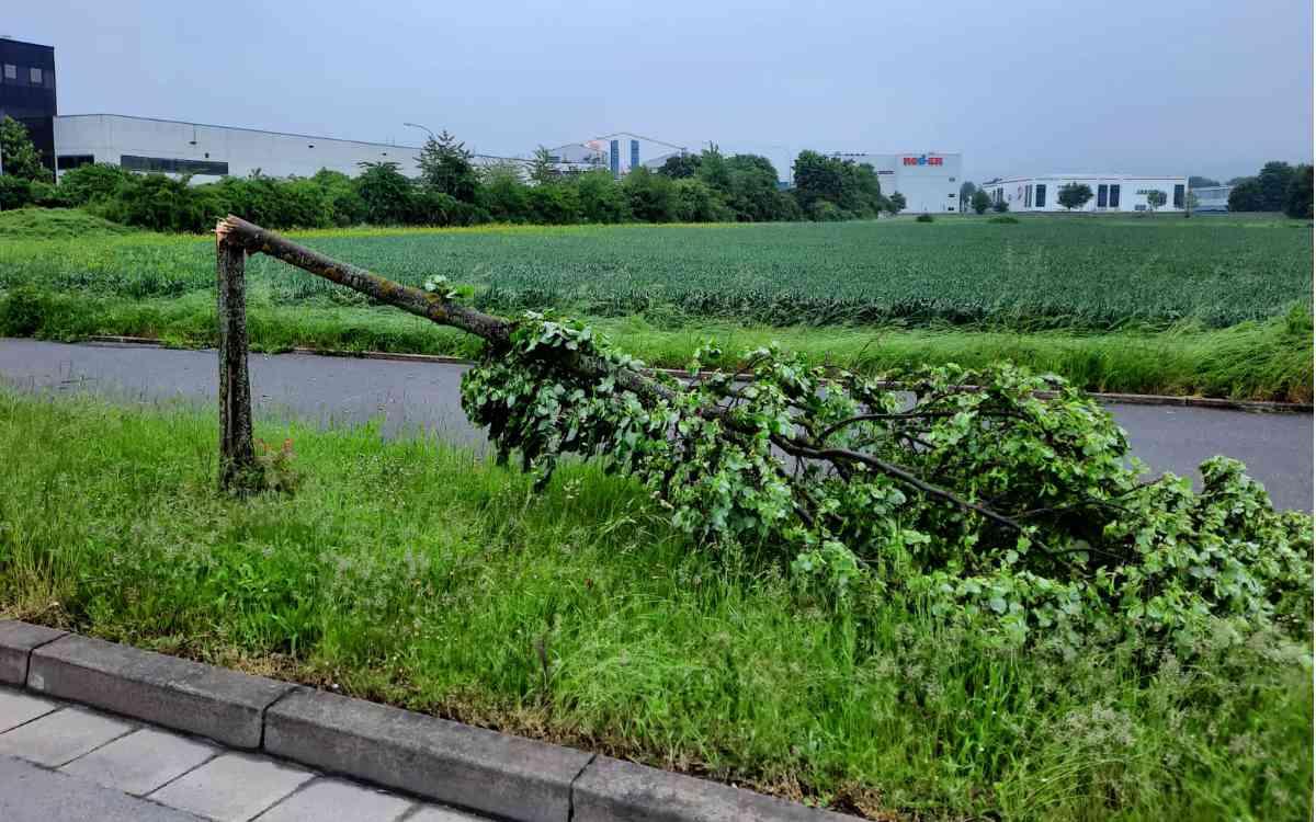 Abgeknickter Baum in der Weiherstraße in Bayreuth auf Höhe der Autobahnbrücke zur Bindlacher Allee. Bild: Jürgen Lenkeit
